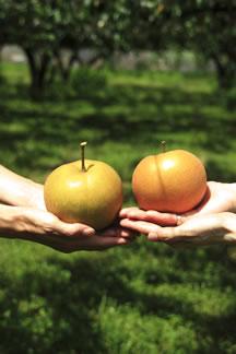 中村農園で梨狩り体験2