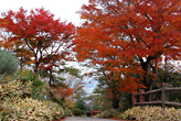 大草山の紅葉