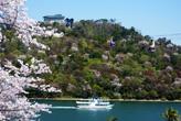 大草山と桜