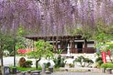 藤の宝林寺