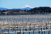 牡蠣と富士山