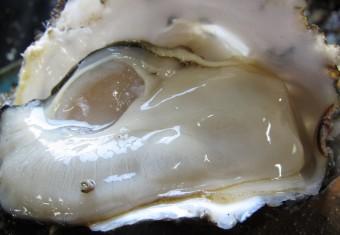 牡蠣剥き作業(堀内昇) 007
