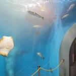 hamanako_aquarium