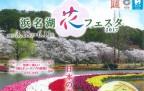 浜名湖 花フェスタ2017